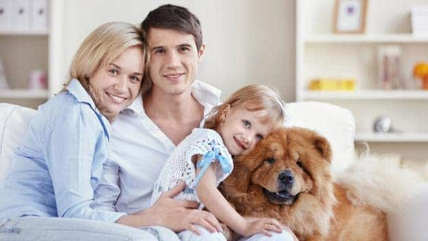 Wills & Trusts dog-young-family Direct Wills Cornwall